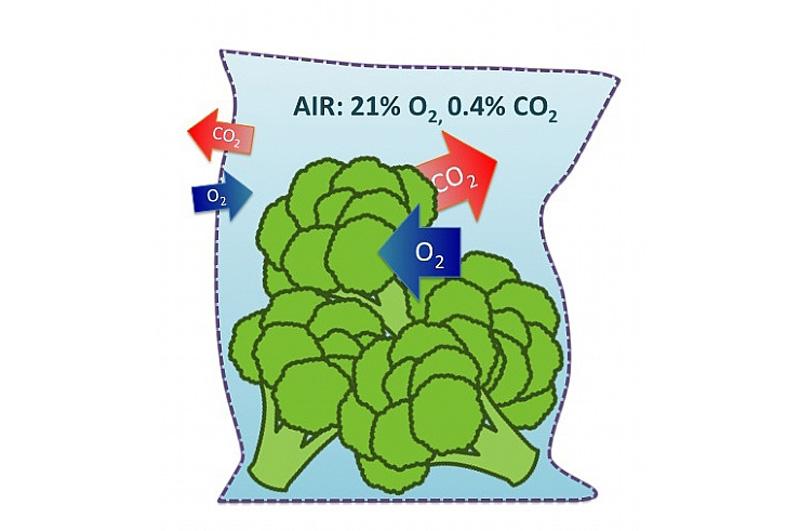 激光打孔——气调果蔬保鲜包装运用方案(图1)