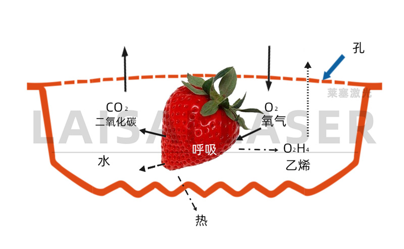 激光打孔——气调果蔬保鲜包装运用方案(图3)